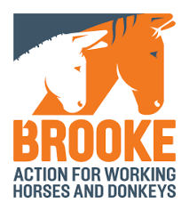 Finance and Admin Officer at The Brooke Hospital for Animals